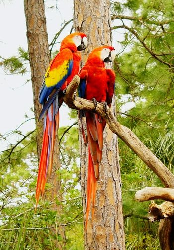 Parrots on tree