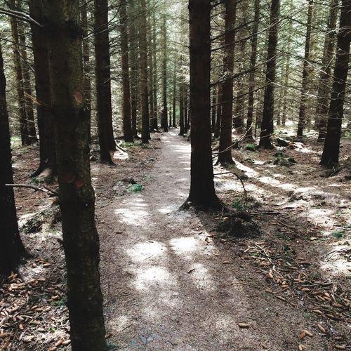 A wonderful walk in the Bin Forest