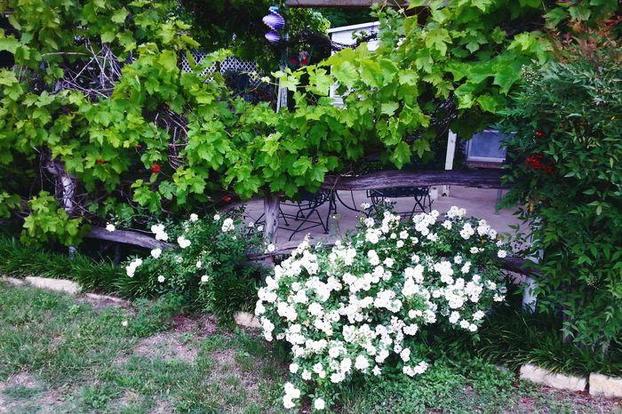 Texas Landscape Follow Me In The Garden Springntexas Flower Porn RosePorn )(
