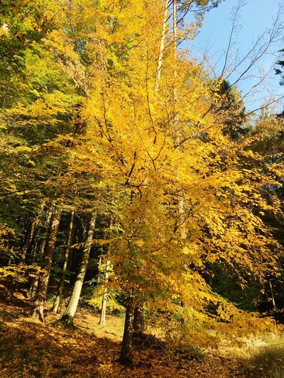 Trynidada October Poland Autumn No People Nature Yellow Plant Tree Backgrounds Full Frame Outdoors Day Sky Beauty In Nature Sunlight Tranquility Land Growth