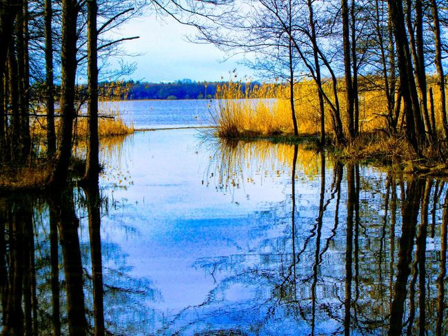 Sweden The True Story Wood EyeEmNewHere Tree Water Lake Symmetry Reflection Sky Refection Reflection Lake
