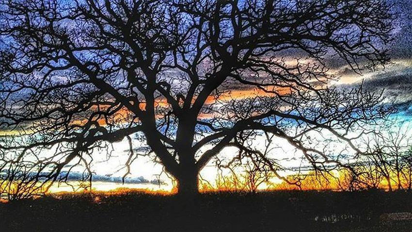 Ol tree and the cold front that came through last night.......Ks_pride Atchison Kansasmag Kansasphotographer Kansasphotos Wow_america_landscape World_bnw Worldwide Fuckyeah Kansasweather Nightphotography Nightphoto Graveyard_dead