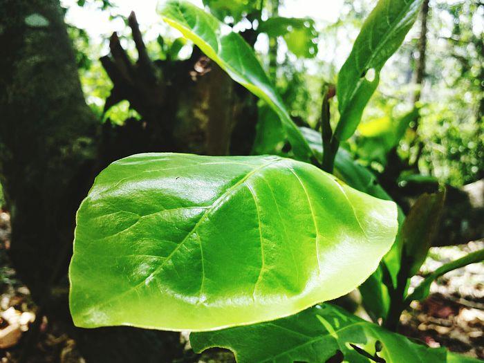 Leafphotography Shiny Leaf Landscape_photography