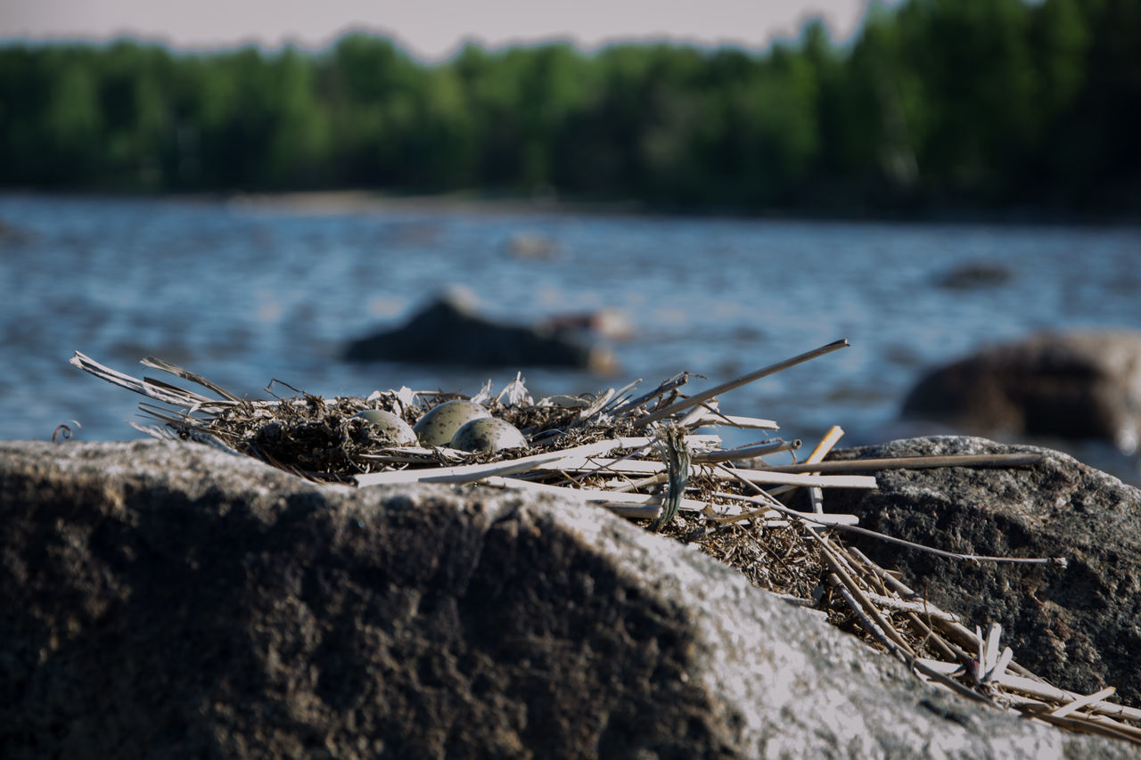water, nature, no people, focus on foreground, day, close-up, tree, selective focus, animal wildlife, rock, plant, solid, animals in the wild, animal, rock - object, wood - material, river, outdoors, dead plant, driftwood