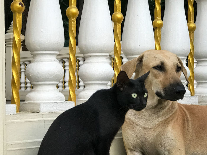 Cat And Dog Friends Close-up Friend Friendship Look Looking Pets Together Watch Watching