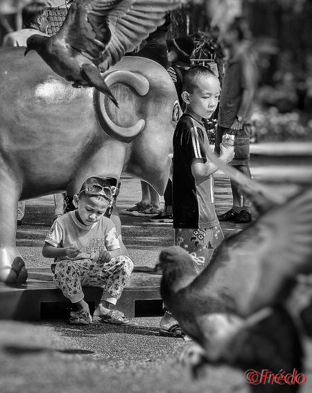 Birds Monochome Photography Kids Kids Being Kids Elephants Birds Birds Of EyeEm  Monochrome Photography Monochrome Real People Streetphoto Portraits Of EyeEm #Chiang Mai Photooftheday Street Photography Thaïlande Human Thailand_allshots EyeEm Best Edits Eyem Gallery Eyem Best Shots Portrait Eyeemphotography EyeEm Gallery Street Photos😄📷🏫⛪🚒🚐🚲⚠ Thailand Photos