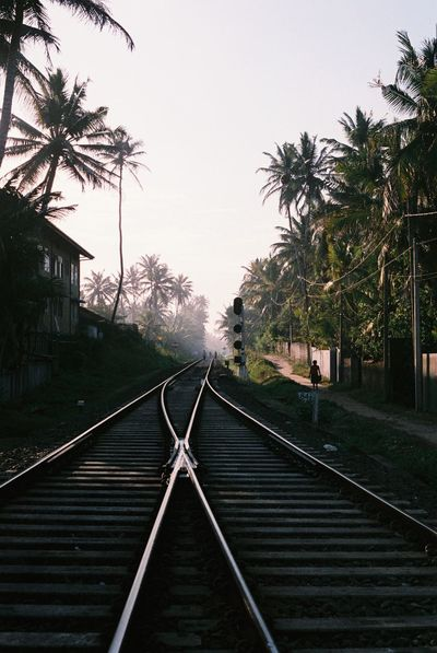Miles Away Tree The Way Forward Railway Railroad Track Clear Sky No People Day Outdoors Sri Lanka Travel Traveling Travel Photography Film Filmphotography Nature Architecture