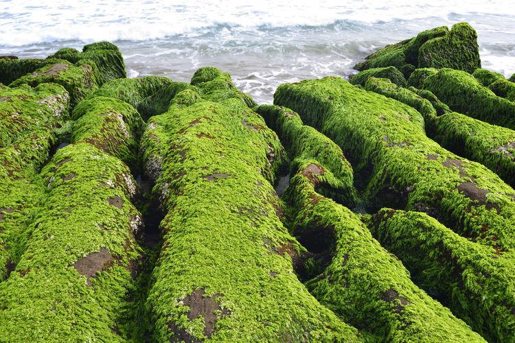 High angle view of moss on sea shore