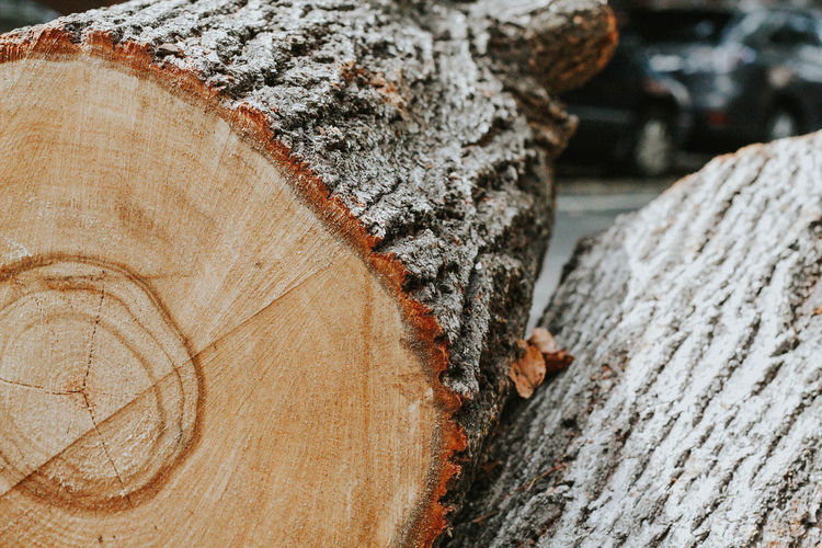 Close-up of logs