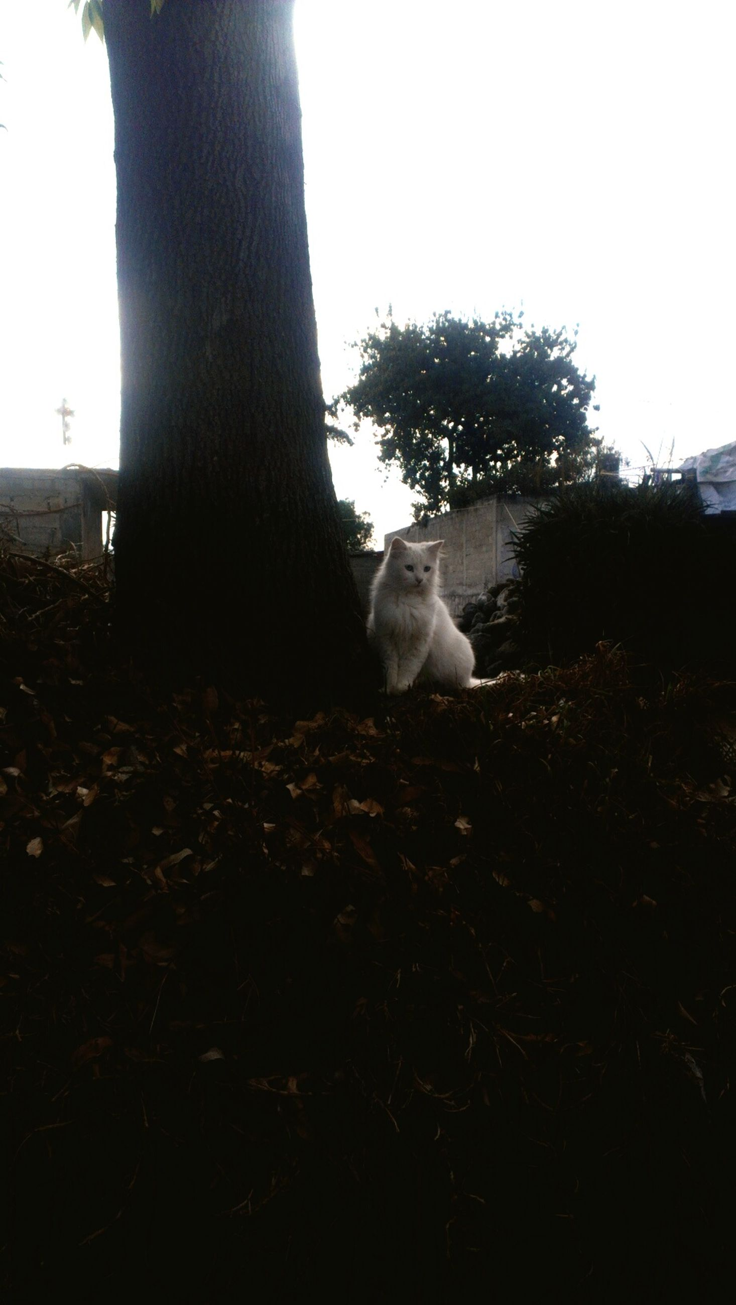 animal themes, one animal, mammal, domestic animals, pets, tree, sunlight, domestic cat, clear sky, wildlife, sky, nature, no people, day, relaxation, cat, field, dog, low angle view, outdoors