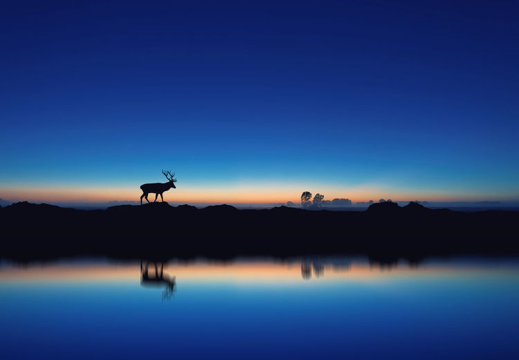 Reflection of silhouette deer in lake against clear blue sky at dusk