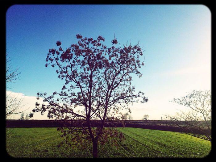 Certe giornate di sole fanno venire una gran voglia d'estate... ? Natura First Eyeem Photo