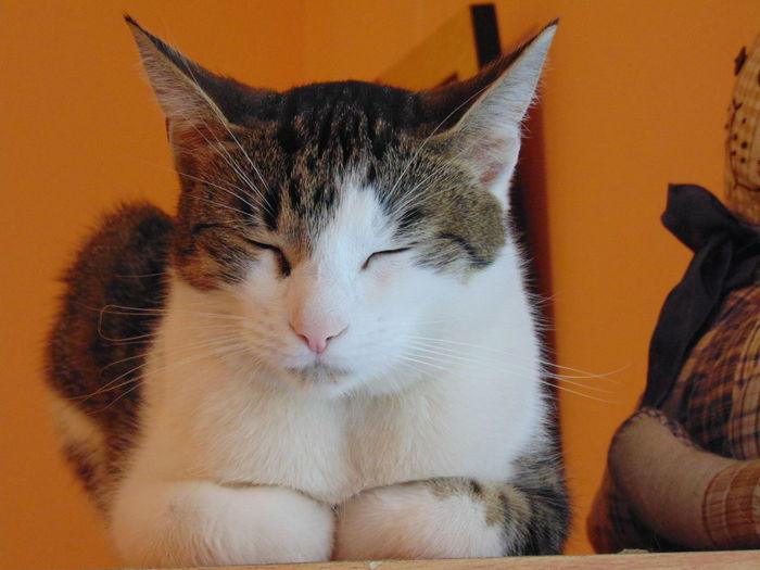 Cat Cat Cafe