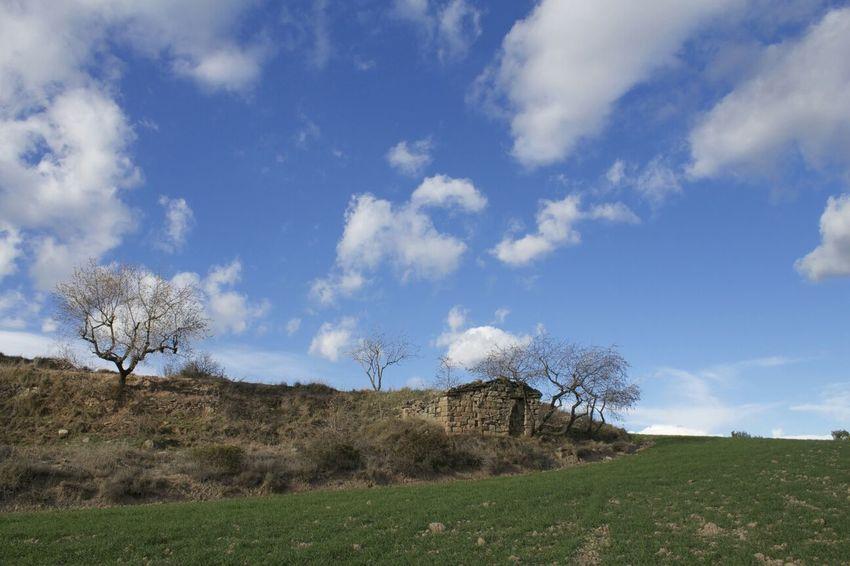 Santa Maria d'Oló. Spring Santa Maria D'Oló Landscape Tree