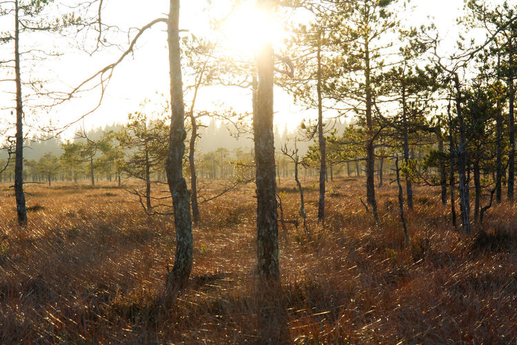 Swamp Sunlight