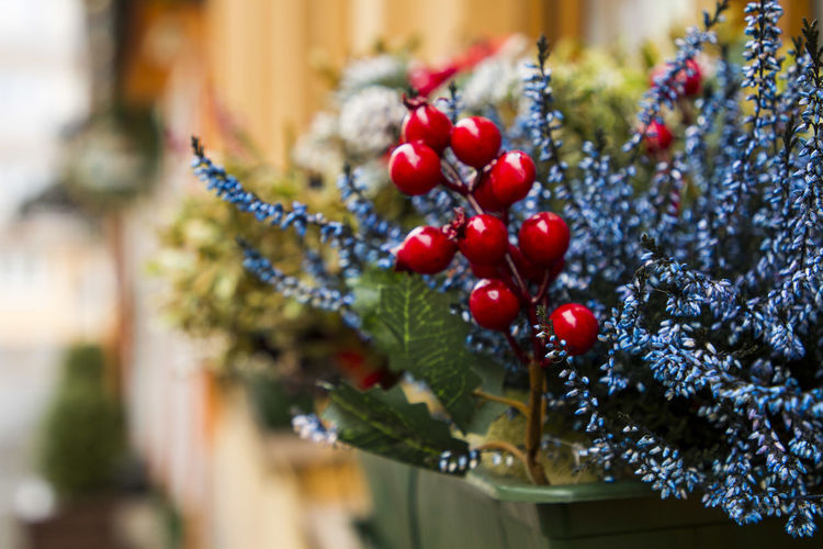 a few photos from the Košice Christmas market Fruit Food And Drink Berry Fruit Food Healthy Eating Christmas Red Holiday Plant No People Close-up Nature Selective Focus Freshness Decoration Tree Day Hanging Wellbeing christmas tree Outdoors Ripe Red Currant Christmas Ornament