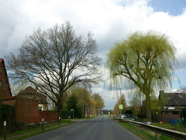 Hugging Trees Treetastic Trauerweide Hugging A Tree Trees Fresh Green Leaves Spring Has Sprung Blue Sky And Clouds Road Scenery Beautiful Trees Ladyphotographerofthemonth Show Road Signs Lamp Post The Great Outdoors - 2016 EyeEm Awards