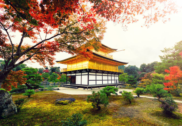 "Kinkakuji Temple "" The Golden Pavilion"" in Kyoto, Japan Tree Plant Built Structure Autumn Architecture Building Exterior Change Building Nature Growth Belief Sky Religion Place Of Worship No People Day Orange Color Spirituality Outdoors Kinkakuji Temple Of Japan Golden Pavilion, Kyoto,japan"