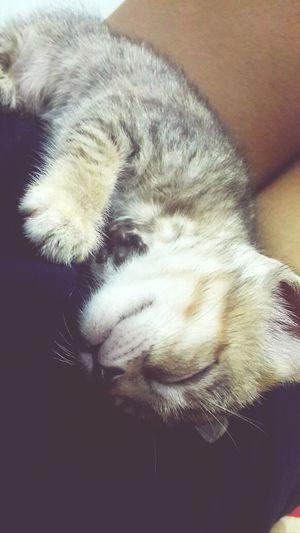 I promise u, i will take care of u, Kitty!