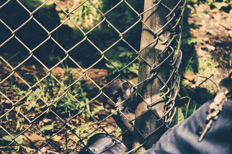 Animal Themes Chainlink Fence Close-up Day Fence Focus On Foreground Mammal Metal Nature No People One Animal Protection Safety Zoo