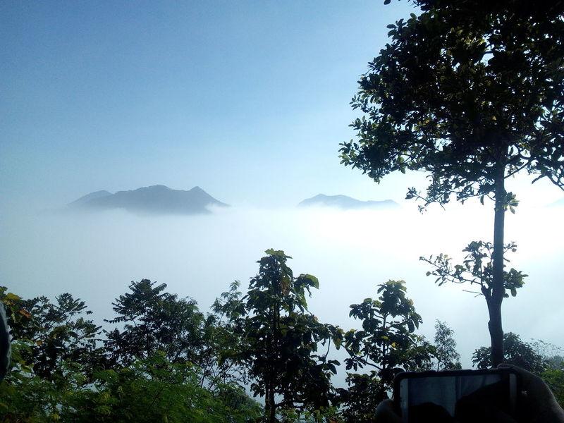 บรรยาอากาศตอนเช้าๆ Foggy Loei,thailand Tree Sky Nature No People Outdoors Beauty In Nature Day First Eyeem Photo