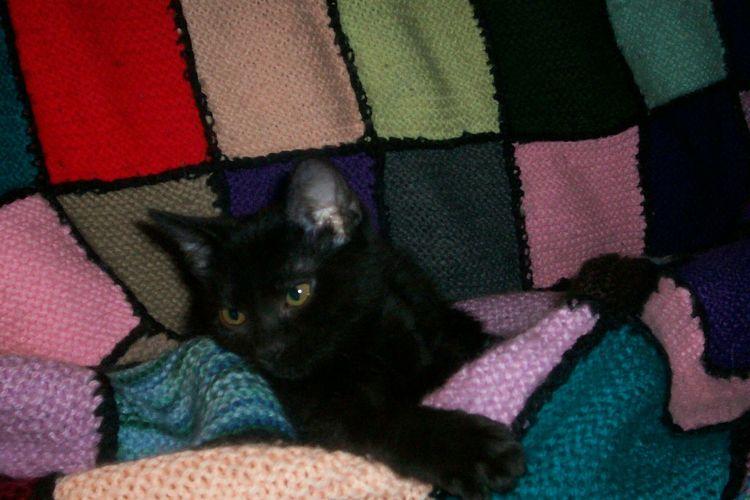 Kitten portrait Animal Love Pet Love Animal Photography Pet Portrait Pet Photography  Blackcatsaregood Blackcatlove BLackCat Cat♡ Kittens <3