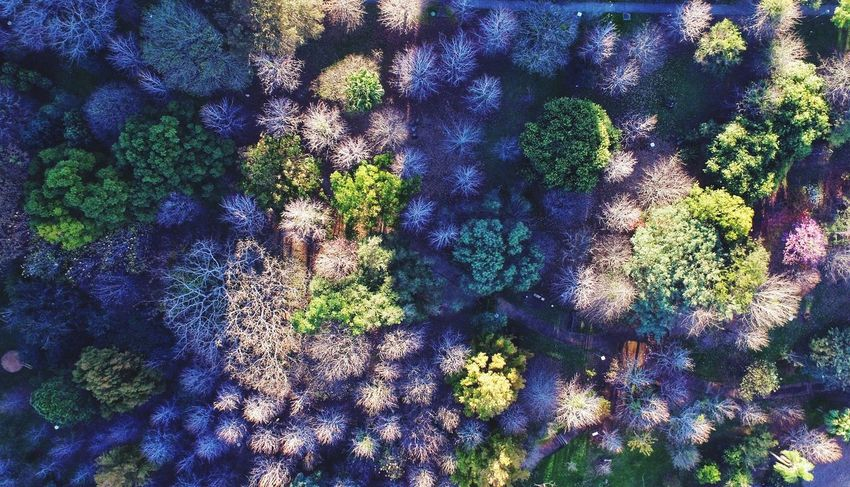 filtro solar Dronephotography Droneshot Dronestagram EyeEm Selects Aerial Photography Aerialshots Aerialview Skypixel AerialLandscape Sweet Dreams Sweetmoments Shades Of Winter Full Frame Backgrounds Day Outdoors Multi Colored No People Low Angle View Nature Plant Growth Beauty In Nature Tree