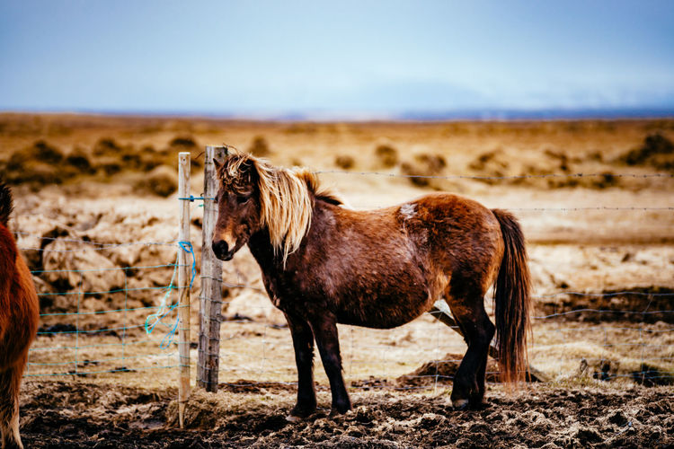 Horse standing by fence on field