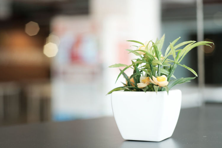 Beauty In Nature Close-up Day Flower Flower Arrangement Flower Head Flower Pot Flowering Plant Focus On Foreground Fragility Freshness Green Color Growth Home Houseplant Indoors  Leaf Nature No People Plant Plant Part Potted Plant Small Vulnerability