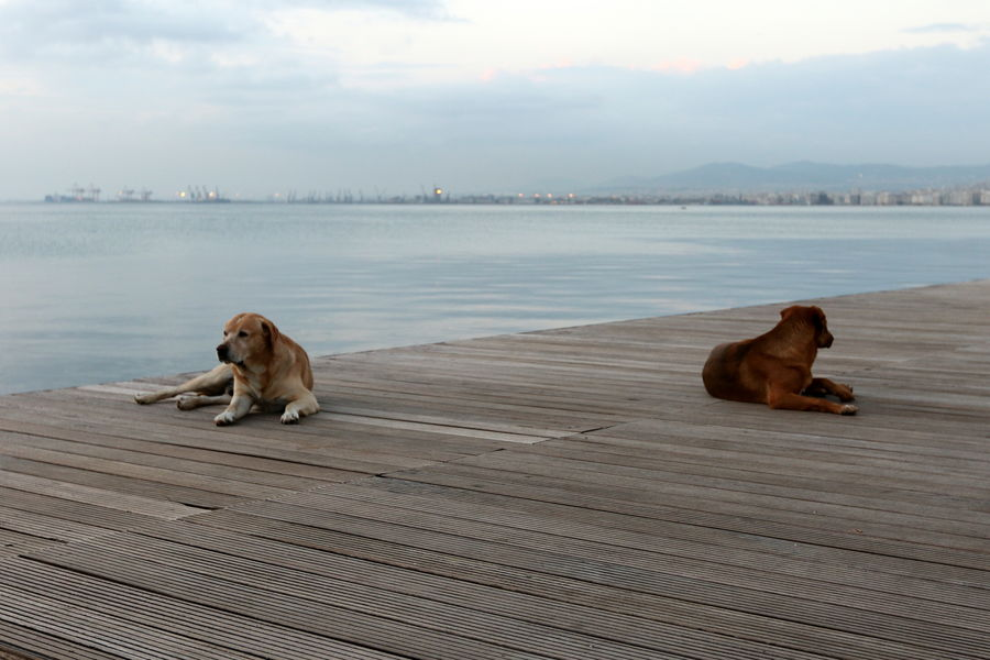 Stray dogs resting on waterfront. Dogs Dogs Of EyeEm Loneliness Stray Dog Animal Themes Day Dog Domestic Animals Lone Mammal Nature No People One Animal Outdoors Pets Pier Separation Sitting Sky Water
