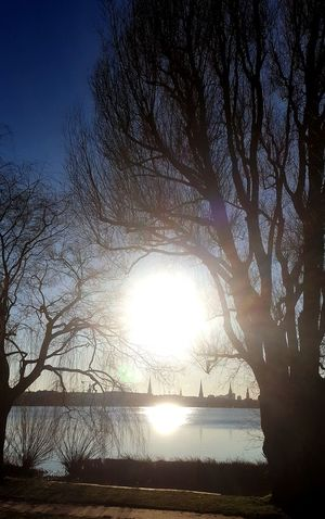 Bluesky January Winter Sunnyday Hamburg Außenalster Alster Mystic Sky Silhouette Nature Tree Sunlight Sunset Water Outdoors Beauty In Nature No People Day Low Angle View Scenics