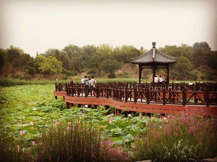 China Park Awesomeplace Beautifulplace Traveling Travel Souvenir Nenuphar Bridge Nature Globetrotting Globetrotter