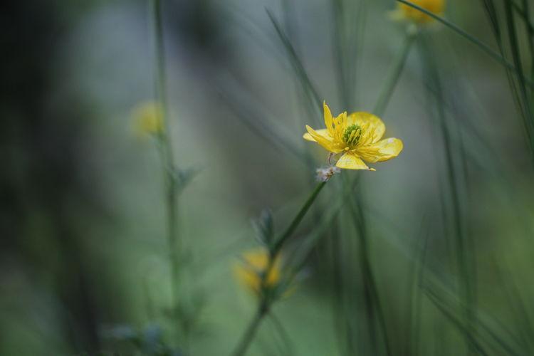 uno Flower
