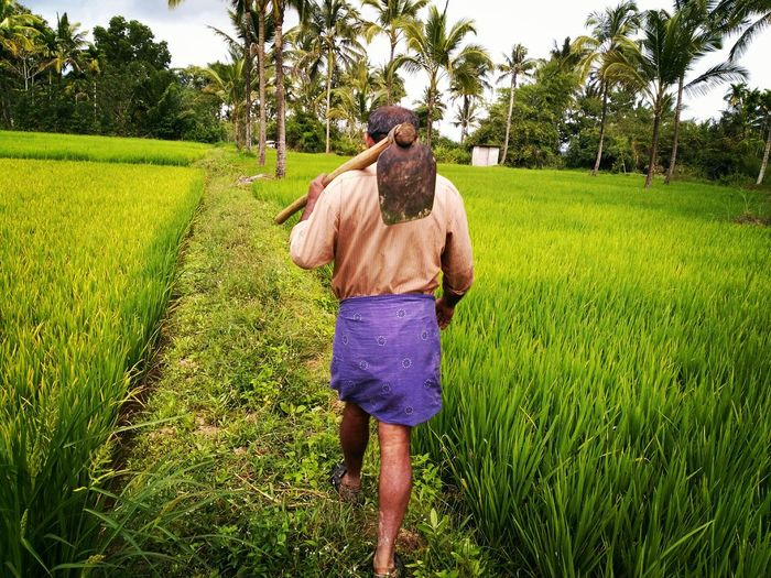 the farmer Farmer Tree Human Back Standing Rear View Full Length Agriculture Men Rice - Cereal Plant Farm Worker Rice Paddy
