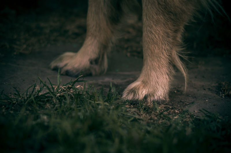 Animal Animal Body Part Animal Leg Animal Themes Canine Close-up Day Domestic Domestic Animals Land Low Section Mammal Nature No People One Animal Outdoors Pets Plant Selective Focus Surface Level Vertebrate