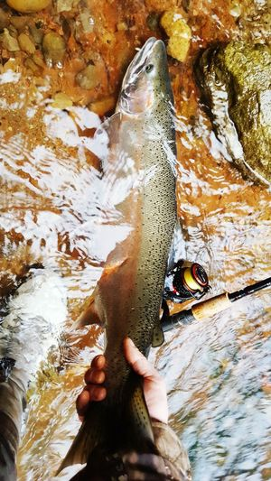 Close-up of hand holding trout