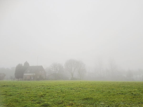 Fog creates an eerie yet peaceful atmosphere on the Dutch countryside. Green The Netherlands Weather Beauty In Nature Countryside Day Dutch Field Fog Grass Holland Landscape Mist Nature No People Outdoors Peaceful Scenics Sky Tranquil Scene Tranquility Tree