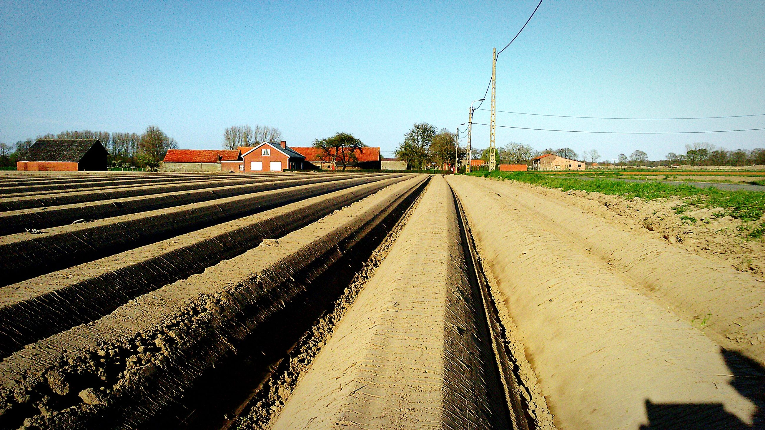clear sky, the way forward, railroad track, diminishing perspective, vanishing point, transportation, sky, copy space, rail transportation, field, landscape, tree, rural scene, long, blue, day, straight, outdoors, nature, built structure