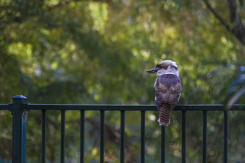 Close-up of bird perching on railing against trees