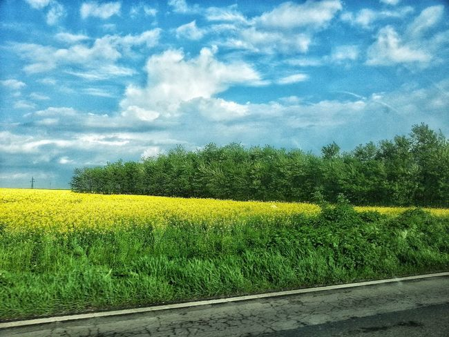 Cloud - Sky Yellow Field Beauty In Nature Tranquility Freshness Growth Nature