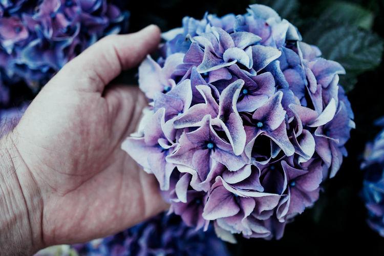 Cropped Image Of Senior Man Holding Purple Flower