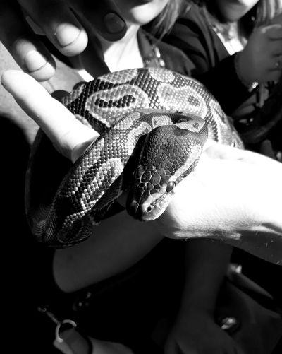 Snake Argentina