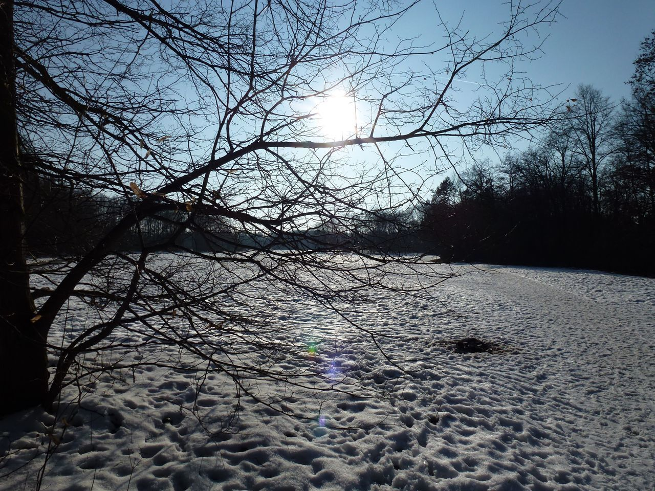 tree, snow, tranquility, nature, winter, no people, sky, bare tree, land, plant, cold temperature, sunlight, tranquil scene, beauty in nature, environment, sun, outdoors, scenics - nature, branch, lens flare, bright, pollution