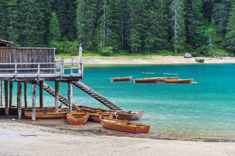 Boat moored on shore at forest