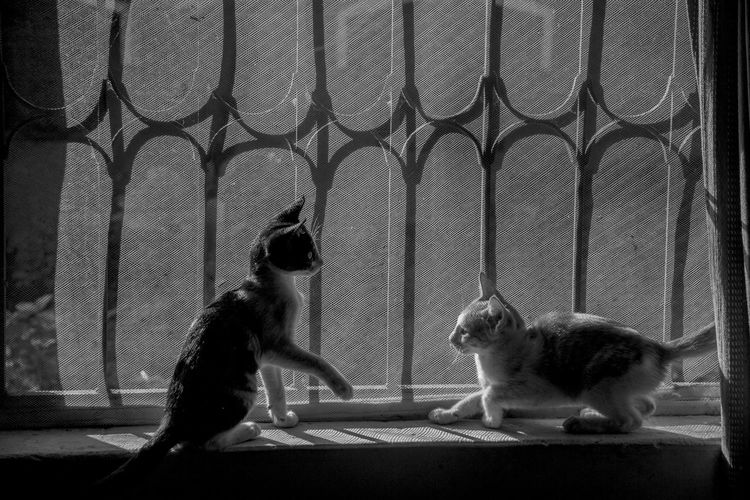 Animal Themes Black And White Cats Domestic Animals Domestic Cat Everyday Joy EyeEm Best Shots EyeEm Gallery Life Monochromatic Monochrome _ Collection Monochrome Photography Monochrome_life Monocrhome Pets Sitting Window Window Sill