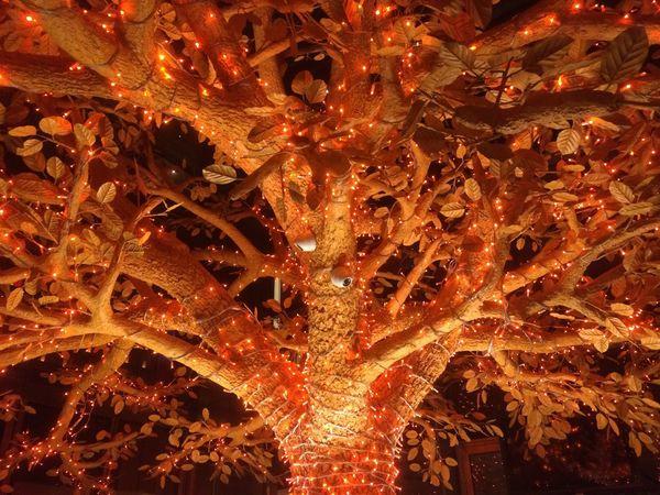 Spy Tree