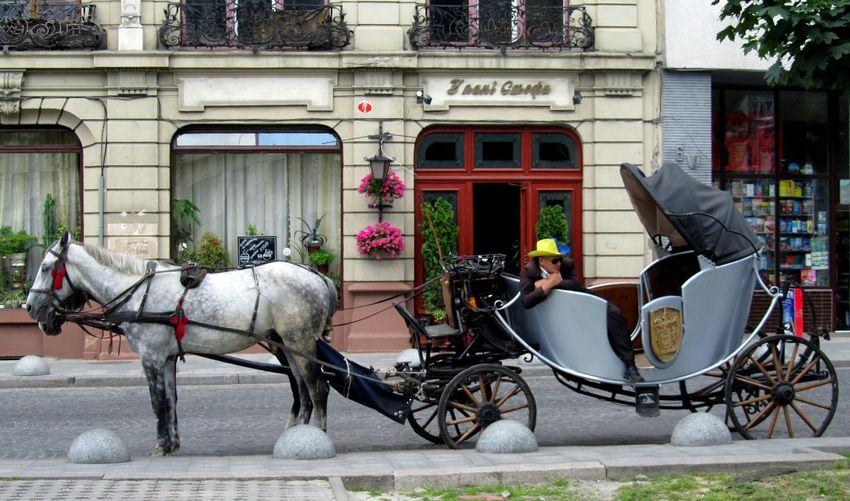 A Horse-drawn Cart City Life Parking