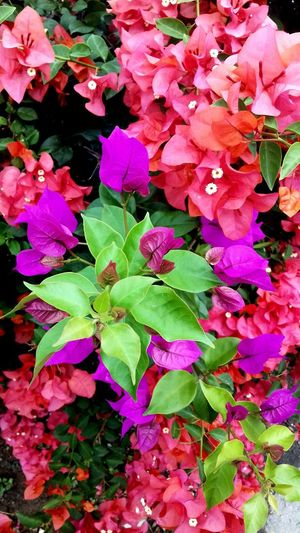 Flower Beauty In Nature Plant Pink Color Petal Nature