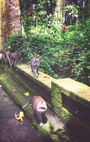 Animal Themes Animals In The Wild Monkey Domestic Animals Animal Wildlife Day Outdoors Nature Tree Portrait Bali Baliisland INDONESIA