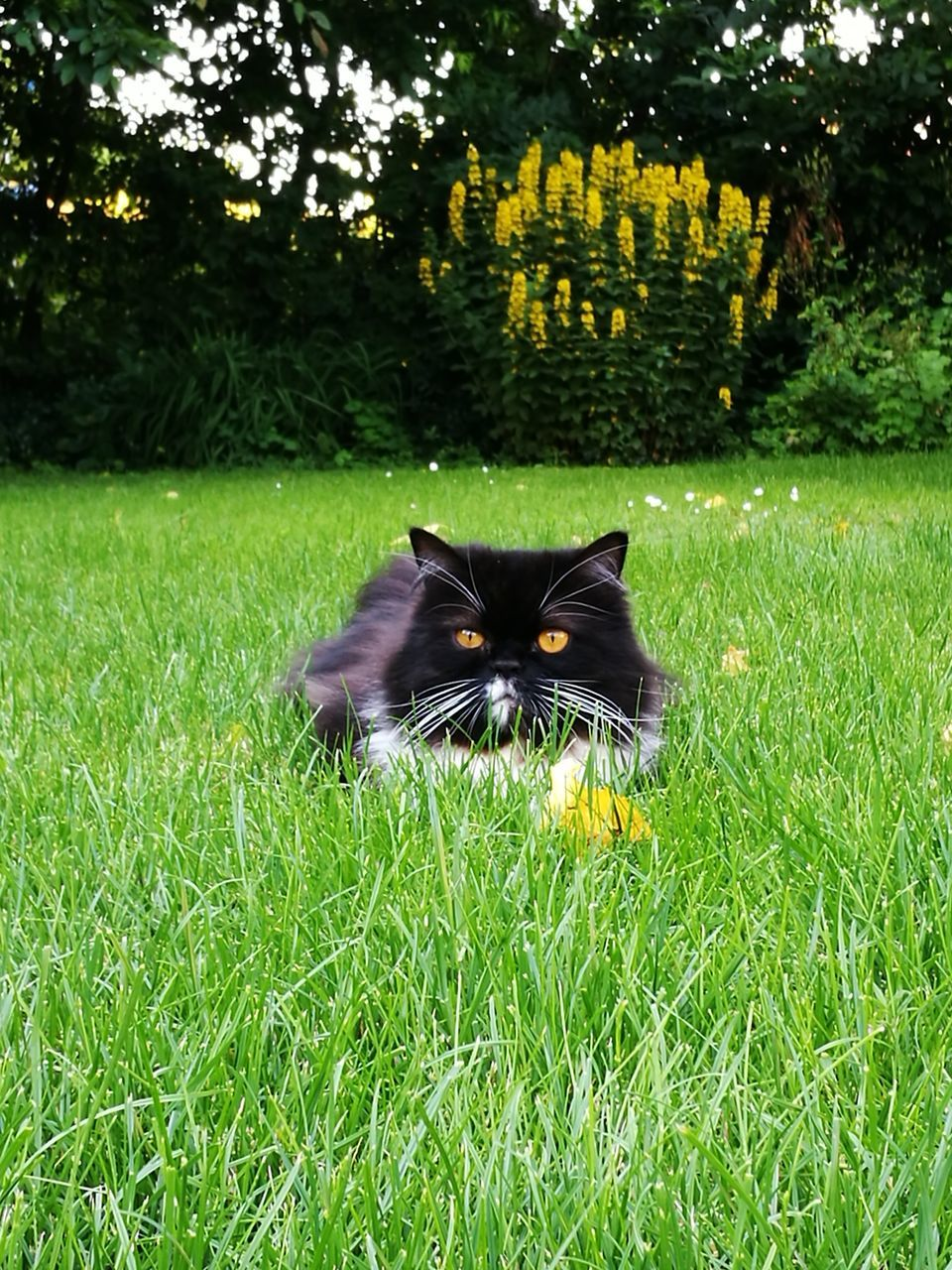 plant, pets, one animal, grass, animal themes, mammal, domestic, cat, animal, domestic animals, feline, domestic cat, looking at camera, vertebrate, portrait, green color, nature, field, no people, land, whisker
